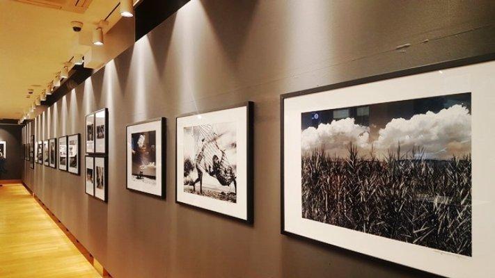 """""""Kumüstü Yaşamlar - Meşe"""" isimli fotoğraf sergisi"""