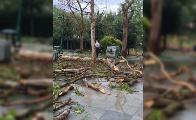 İBB Gezi Parkı'nda Kuruyan Ağaçları Kaldırarak Yenileri Dikiliyor.