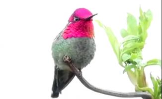 Sürekli renk değiştiren kuş
