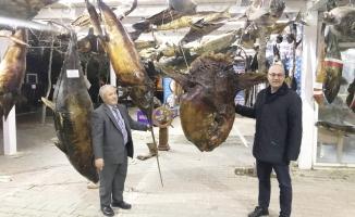 Deniz Canlıları Müzesi Görenleri Hayran Bırakıyor