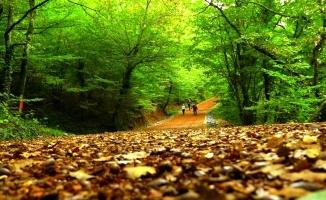 İstanbul Doğa Hatıra Ormanı