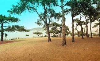 İstanbul'un seyir terası: Dilburnu Tabiat Parkı
