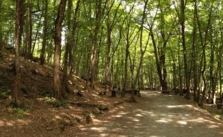İstanbul'un yanı başındaki cennet köşesi: Irmak Tabiat Parkı