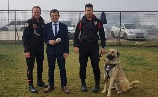 Kangal ve Akbaş tescilli 'polis devriye köpeği' oldu