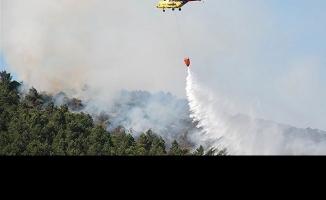 Eyüp Hasdal'da orman yangını söndürüldü
