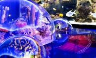 Penguenler ve 17 Bin Kara ve Deniz Canlısı Sömestr Tatilinde Çocukları Bekliyor!