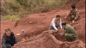 Çin'de 180 milyon yıllık dinazor fosili bulundu