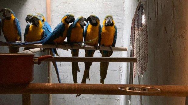 Beykoz'da kaçak papağan operasyonu