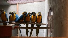 Beykoz#039;da kaçak papağan operasyonu